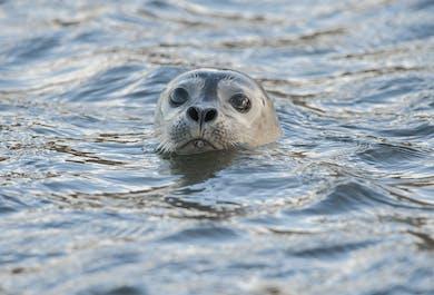 Park Narodowy Snaefellsnes | Wycieczka w małej grupie
