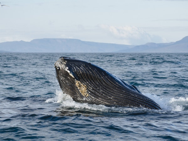 Eyjafjord Whale Watching