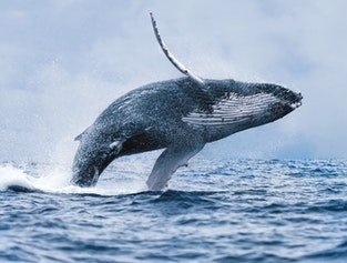 Best Value Whale Watching Trip