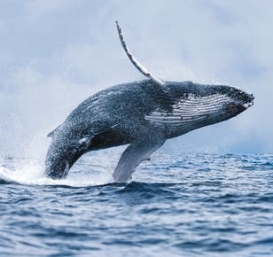 Китовое сафари по лучшей цене | Тур из Рейкьявика