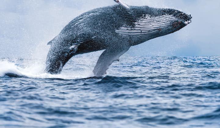 Observation de baleines au large de Reykjavik
