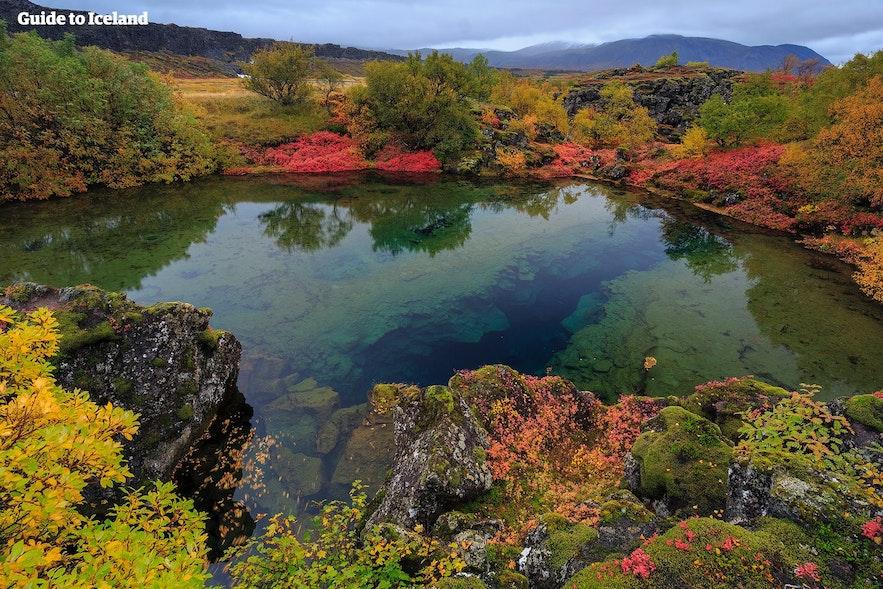 Höstfärger i Þingvellir nationalpark