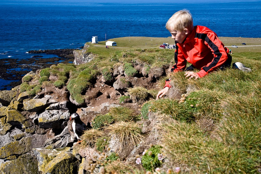 The Látrabjarg cliffs are an amazing place for people of all ages to have a personal interaction with a wild animal.