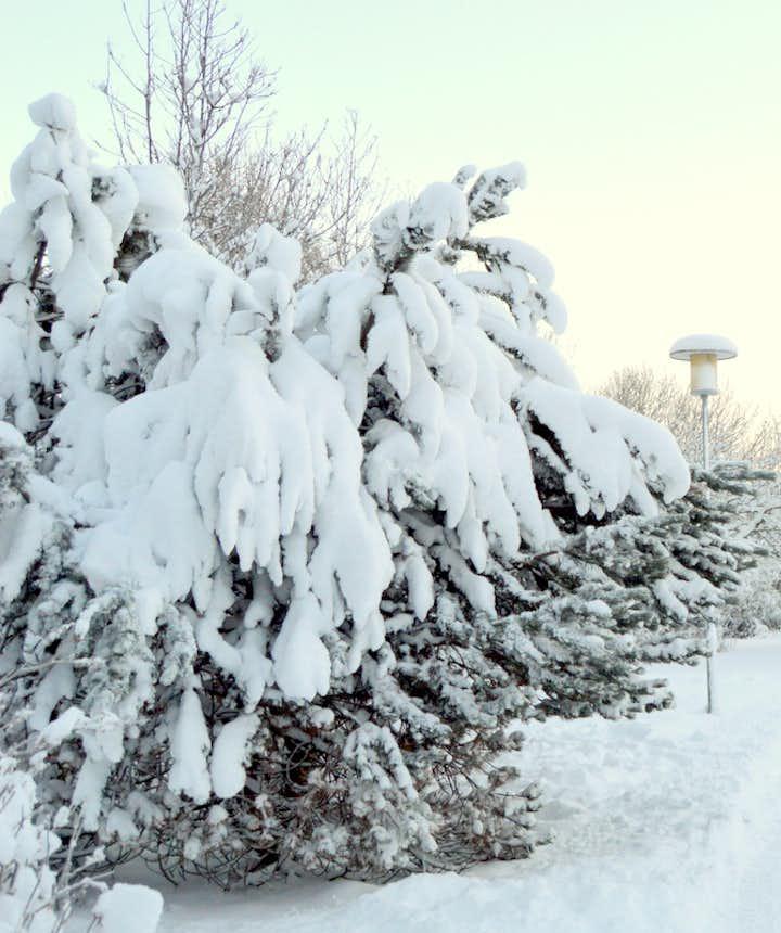 冰岛冬季成了一片纯白的仙境