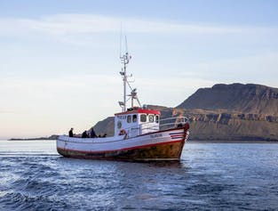 Relaxing Evening Cruise at Breiðdalsvík Bay