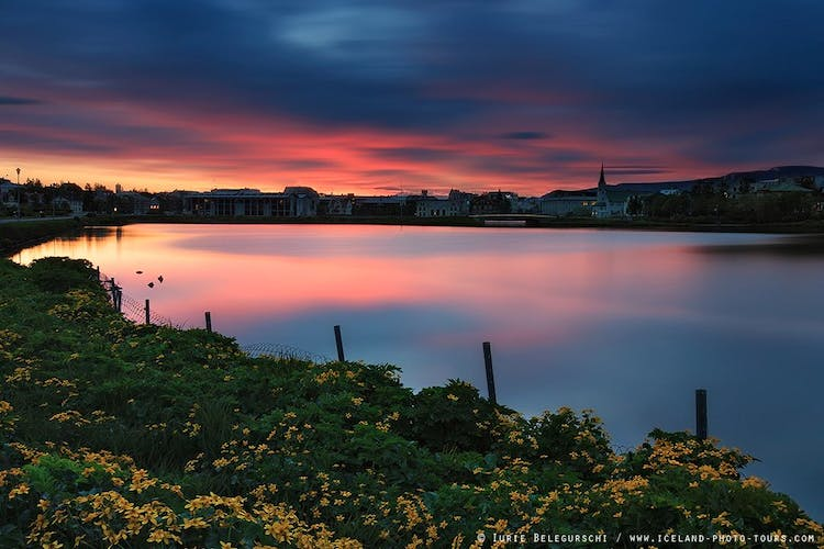 Tjörnin pond is beautiful beneath the midnight sun, surrounded by wildflowers.