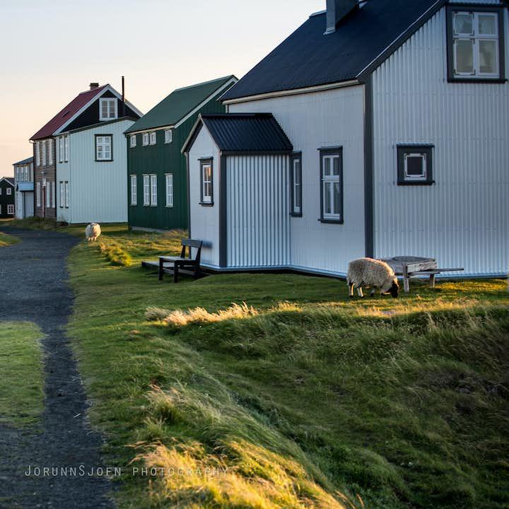 Autotour été 10 jours | Nord-Ouest de l'Islande hors des sentiers battus