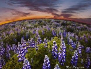 Bursztynowe światło słońca o północy wypełnia krajobraz podczas białych nocy na Islandii.