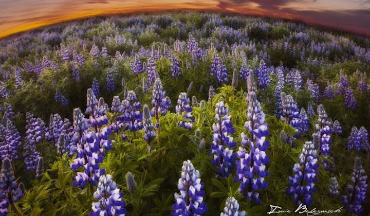 The amber light of the midnight sun fills the air during Icelandic summer nights.