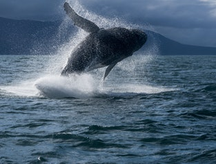 The mysterious Snæfellsnes National Park + Whale Watching - 2 day tour