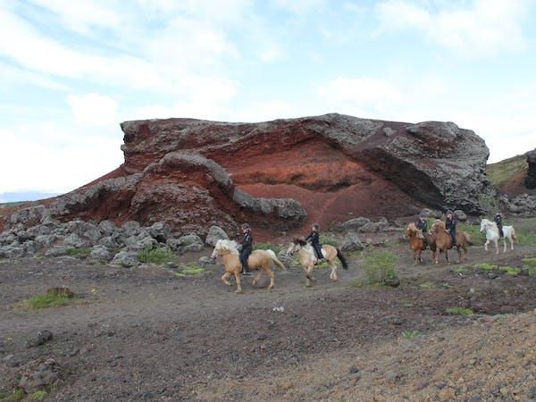 The Icelandic Horse