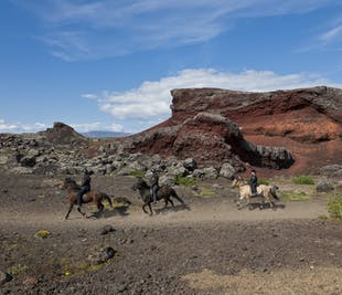 Horse Riding and Whale Watching from Reykjavik