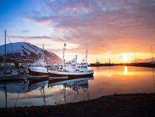 Observation de baleines depuis Dalvik dans le Nord de l'Islande