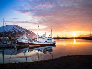 Observation de baleines depuis Dalvik | Nord de l'Islande