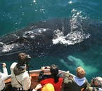 Expect to see humpback whales on your whale watching tour in Dalvík, North Iceland.