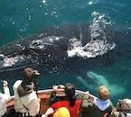 Während einer Walbeobachtung in Dalvík, Nordisland, besteht die Möglichkeit Buckelwale sehen!