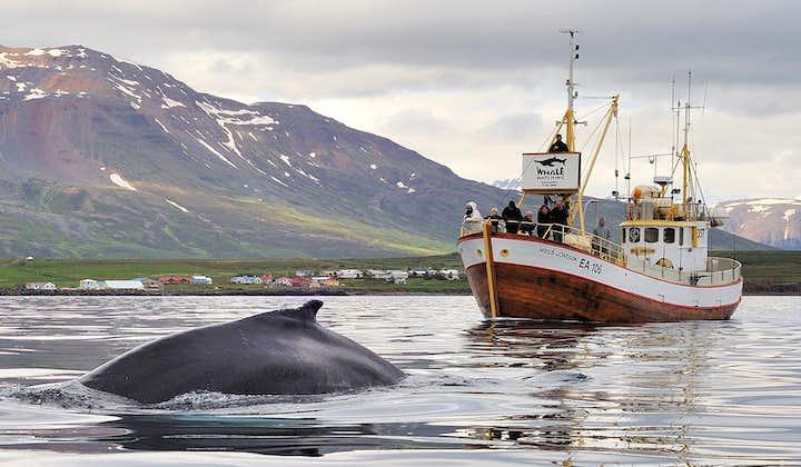 Avistamiento de ballenas y pesca en el mar desde Hauganes   Norte de Islandia