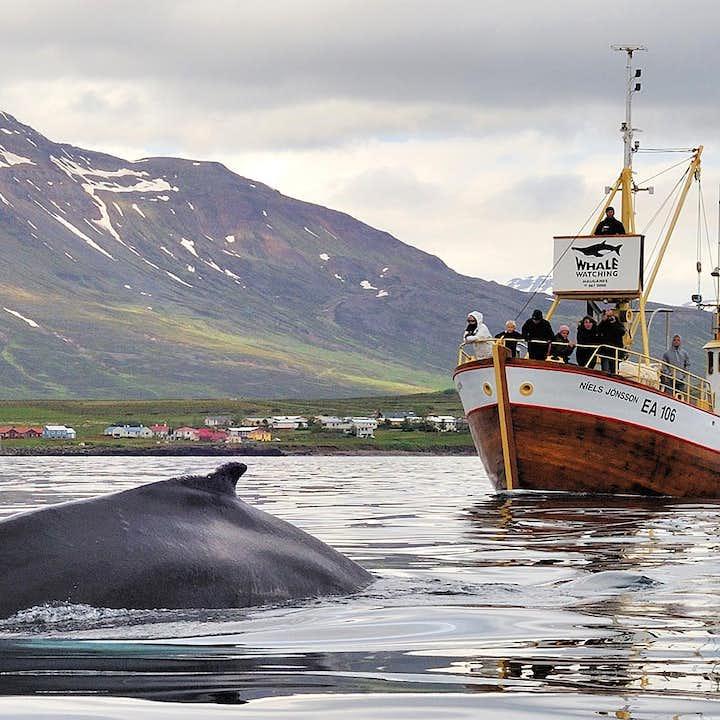 观鲸+海钓 Hauganes小镇出发