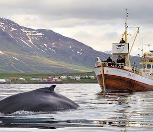 Avistamiento de ballenas y pesca en el mar desde Hauganes | Norte de Islandia