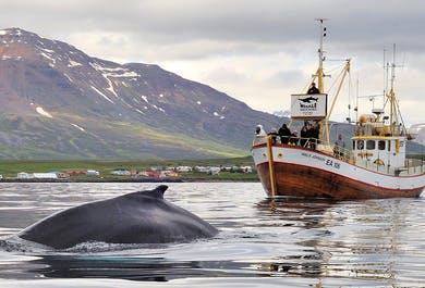 Whale Watching and Sea Angling