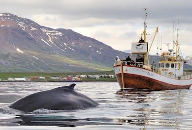 달빅 고래 관측을 하며 바다 낚시까지 하는 투어