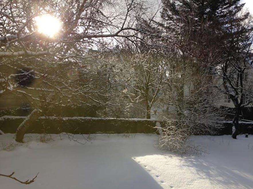 Fresh snow in a garden at Laufásvegur in Reykjavík