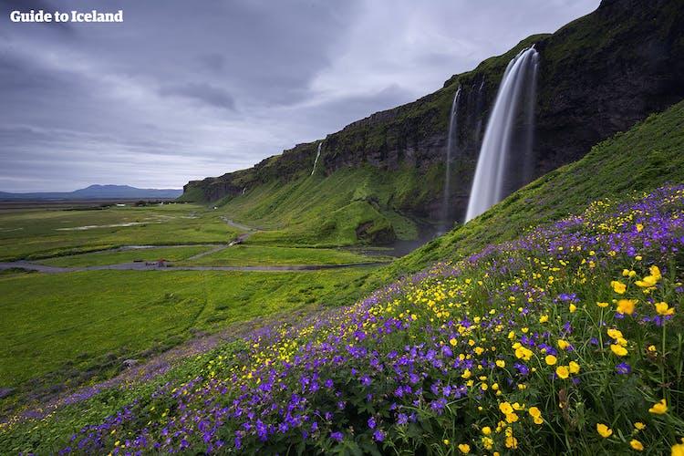 Seljalandsfoss, jeden z klejnotów południowego wybrzeża, jest piękny w jasne letnie miesiące.