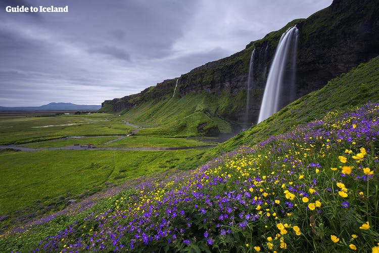 Seljalandsfoss, one of the jewels of the South Coast, is made all the beautiful in the bright summer months.