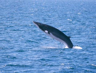 레이캬비크 출발 고래 관측 및 골든써클 투어