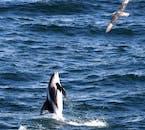 Cercle d'Or et observation de baleines au large de Reykjavik