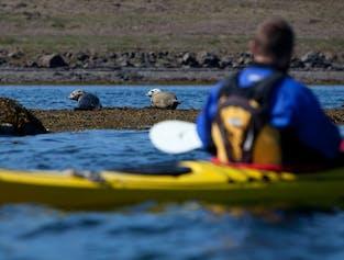 Kayak avec les phoques | Hvalfjordur