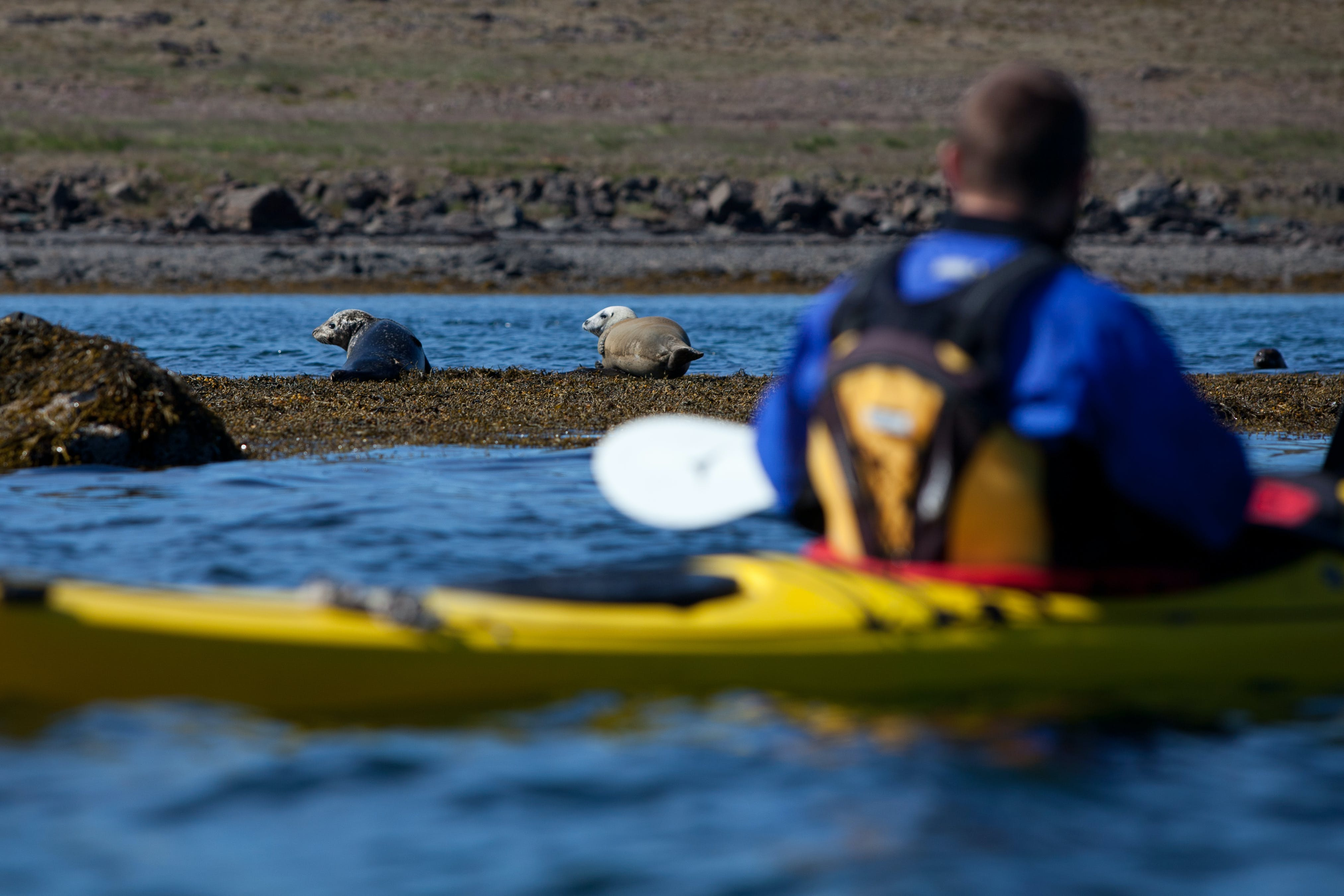 Kayaking with Seals | A trip to Hvalfjordur fjord