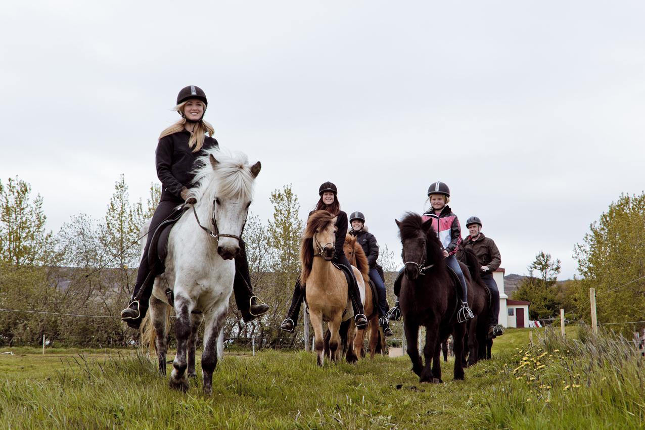 在冰岛北部之都阿克雷里体验骑马的乐趣。