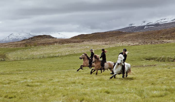 骑马穿越冰岛北部的葱翠农场。