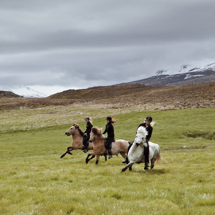 Flying through the landscapes of North Iceland on horseback is a thrilling adventure.