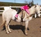 アイスランドの馬はとても友好的で、乗馬した人たちは一瞬でこの馬の虜になります。