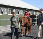 The Icelandic horse stables have a paddock where you can get comfortable with your steed.