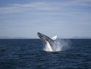 Horseback Riding and Whale Watching