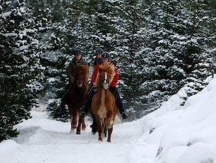 Balade à cheval à Helgafell ou Heidmork   Pour cavaliers expérimentés