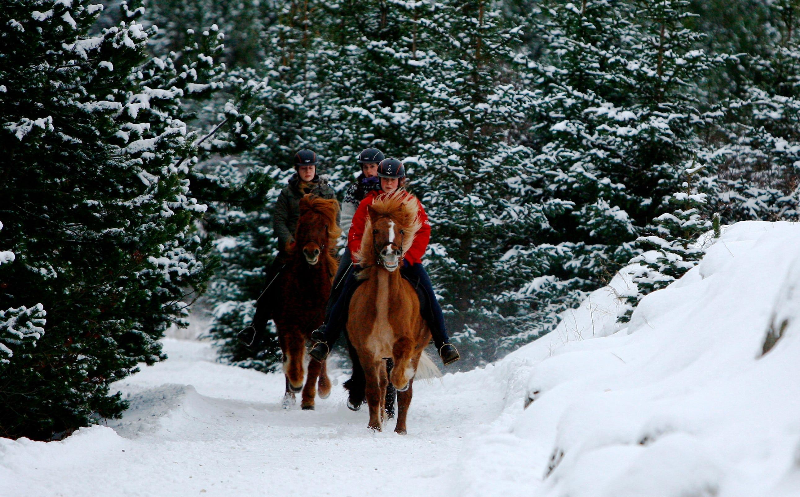 C'est féérique de faire une balade à cheval en hiver
