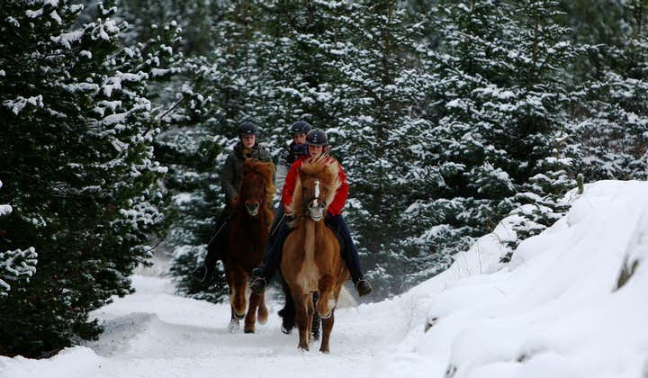 In winter, this Icelandic horse riding tour has an alpine feel with the pine trees and snow.