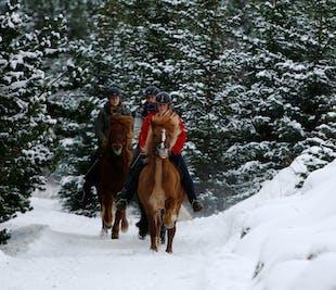 Viking Express Horseback Tour   Heidmork