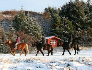 Family Horseback Riding Tour   From Reykjavik