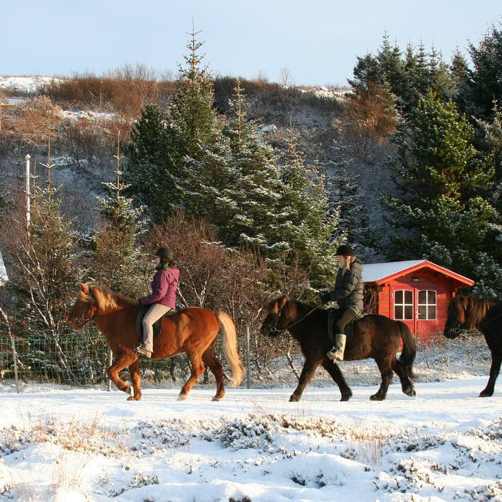 Journey through an Icelandic winter wonderland on horseback.