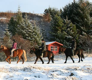 Nature Horseback Riding Tour for Beginners | From Reykjavik