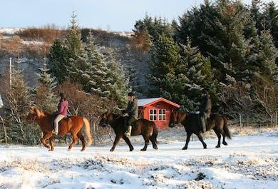 Sortie à cheval familiale en nature | Départ de Reykjavik