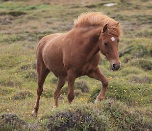 ゴールデンサークルツアー|クヴェラゲルジでの乗馬体験付き