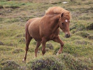 Excursión de un día al Círculo Dorado | Con paseo a caballo en una zona geotérmica