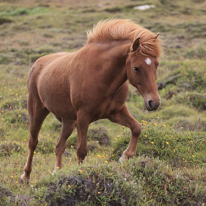Excursión de un día al Círculo Dorado con paseo a caballo