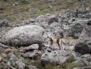 Photographie dans les Fjords de l'Ouest   Vie animalière
